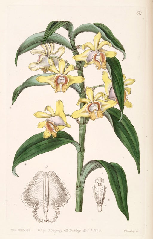 32 Orchid Species Feared Extinct in Bangladesh