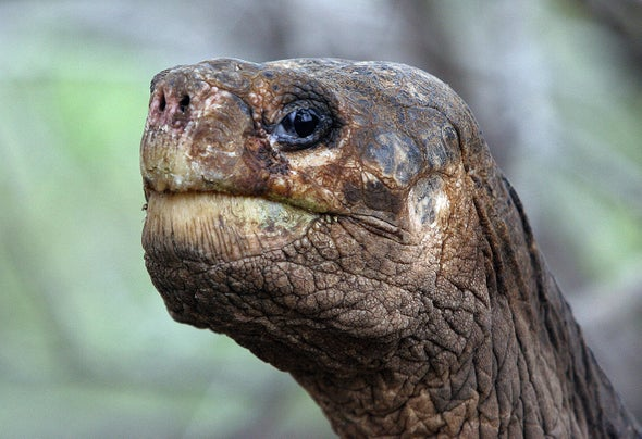 RIP, Lonesome George, the Last-of-His-Kind Galapágos Tortoise