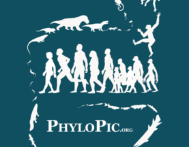 PhyloPic: 500 Million Years, 44 Silhouettes