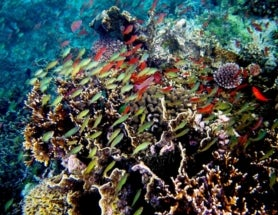 The Richest Reef: Exploring the Most Diverse Marine Ecosystem on Earth