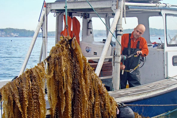 Soil and Seaweed: Farming Our Way to a Climate Solution