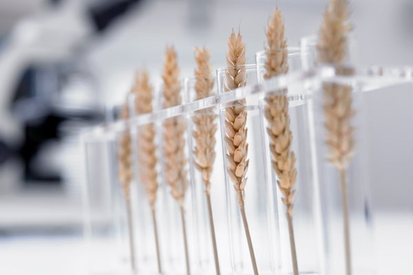 GMOs Are Not Agriculture