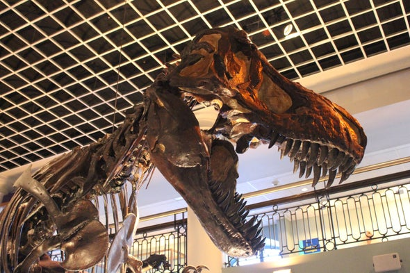 Giant Carnivorous Dinosaurs Showed Off With Skull Decorations