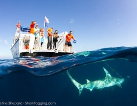 An Interview with Christine Shepard, Shark Photographer