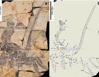 Paleo Profile: The Silk Bird