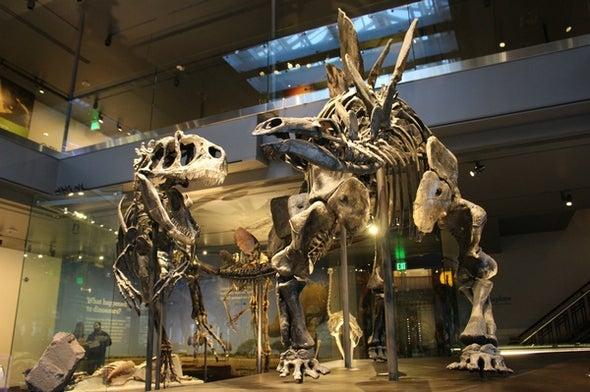 Shaking the Dinosaur Family Tree