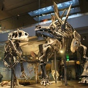 Shaking the Dinosaur Family Tree
