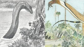 Misreading the Mokele-Mbembe (the Mokele-Mbembe, Part 1)