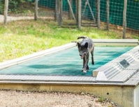 Why the World's Longest Treadmill Was Created for Wolves