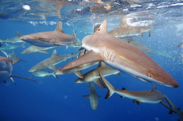 A 10-Year Strategy to Save Sharks and Rays