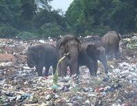 Disrupting the Single-Use Plastic Economy