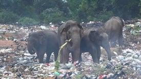 破坏一次性塑料经济