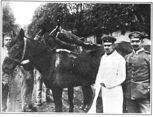 Horse Doctors, 1916