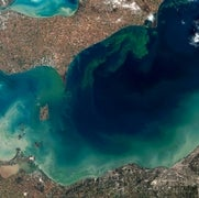 Toxic Algae Blooms Are on the Rise