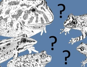 Nonstandard Ideas in Amphibian Evolution, Part 1