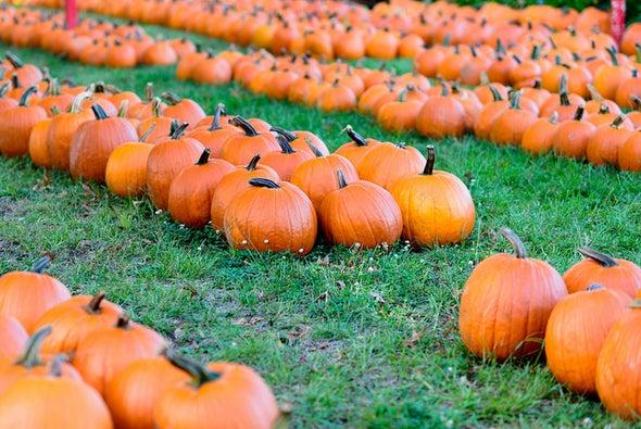 'Tis the Season...for Pumpkin Spice Lattices!