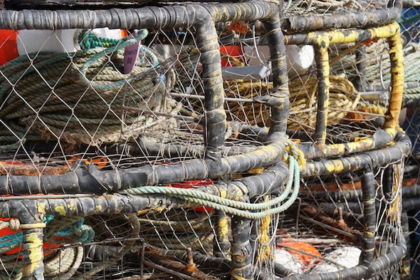 Crab Fishing in California: Risky Business