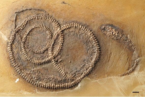 The Turducken of Fossils