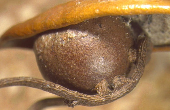 Florida Oaks Host Exciting Parasite-on-Parasite Action