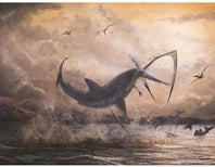 Prehistoric Shark May Have Caught a Dinner on the Wing