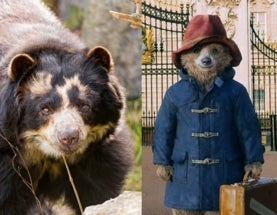 The Real Paddington Bear: Cute, Unique and Endangered