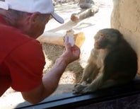 Did the Baboon Feel the Magic?
