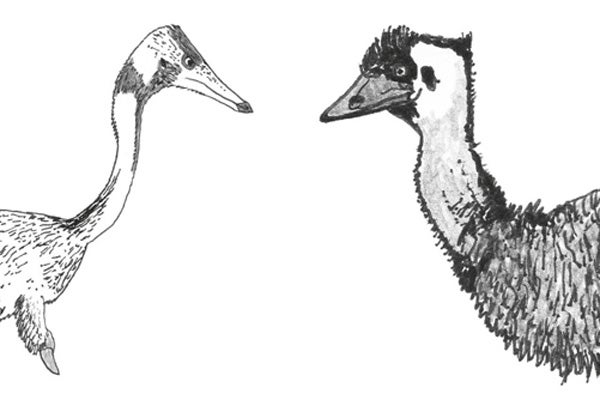The Integrated Maniraptoran, Part 3: Feathers Did Not Evolve in an Aerodynamic Context