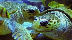 How One Turtle's Tale Helps Promote Ocean Conservation