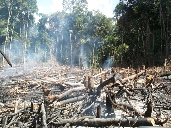 Amazon Trees Face Extinction Crisis, but There's Hope