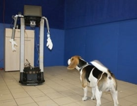 If You Need To Test Your New Robot, Ask A Dog