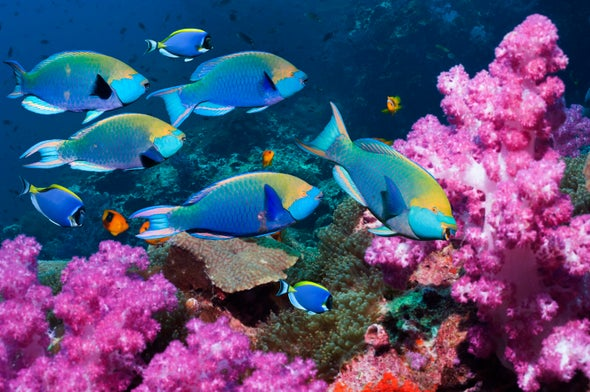 An Ode to Parrotfish in a Climate-Challenged World