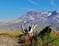 The Absolutely Definitive Mount Saint Helens Collection