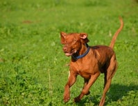 Are Off-Leash Experiences Good For You and Your Dog?