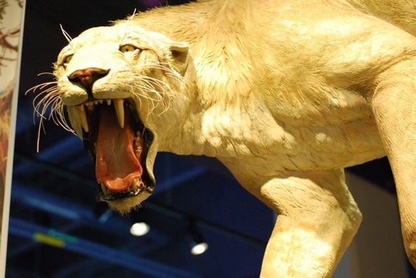 The Bite of the Saber-Tooth