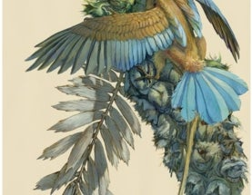 For Admirers of Audubon & Sibley, Two Recurring Art Exhibits