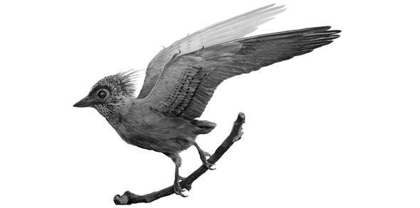 Delicate Fossil Bird Reveals Prehistoric Plumage Patterns