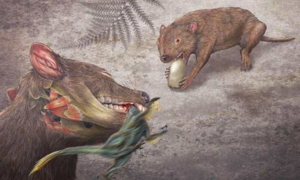 Dinosaur-Age Mammal Had an Impressive Bite