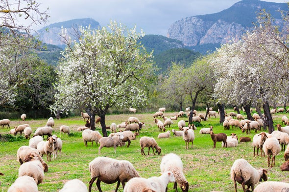 Farming Degrades Land; Farming Can Also Bring It Back