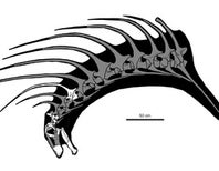 New Spiky Dinosaur Discovered in Patagonia
