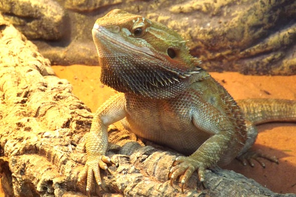 Tetrapod Zoology 10th-Birthday Extravaganza, Part 1: 2015 in Review