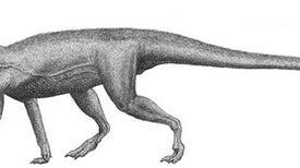 New Proto-Dinosaur Found in Colorado