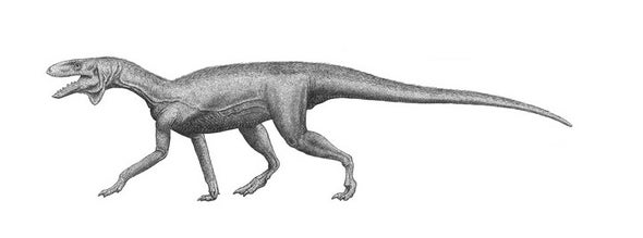 New Proto-Dinosaur Found in Colorado