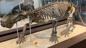 Saber-Toothed Protomammal was a Quick Healer