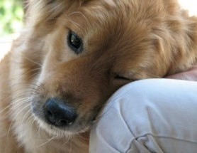 Man's Best Friend? The Mysterious Role of Oxytocin Revealed