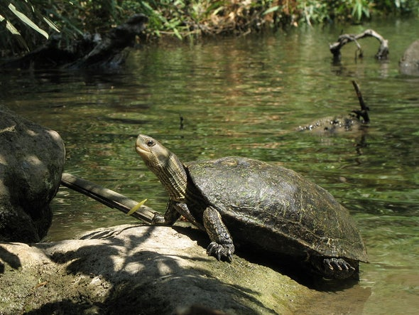 Heavy: Caspian Turtles Are Polluted by Toxic Lead, Mercury and Cadmium
