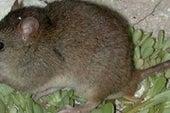 气候变化声称其首次哺乳动物灭绝