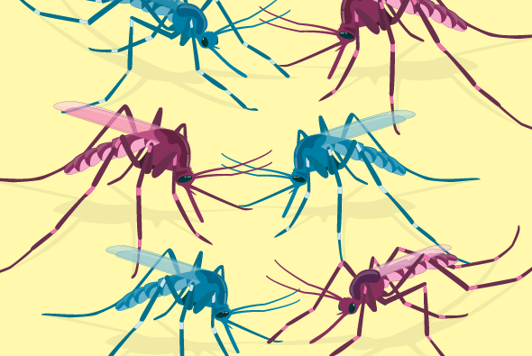 A Visual Guide to Modified Mosquitoes