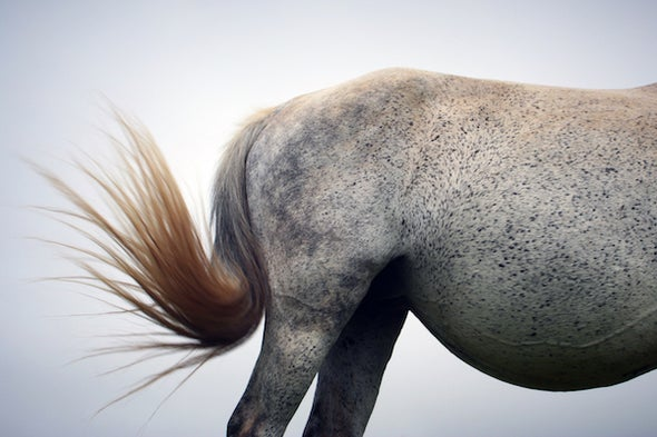 What's the Use of a Horse's Tail?