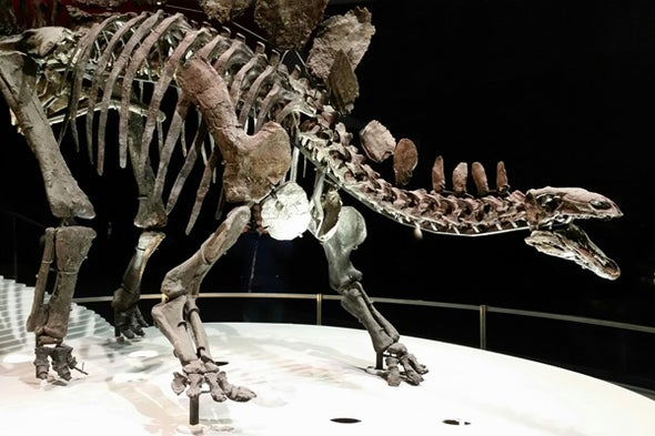 The <i>Stegosaurus</i> Plate Controversy