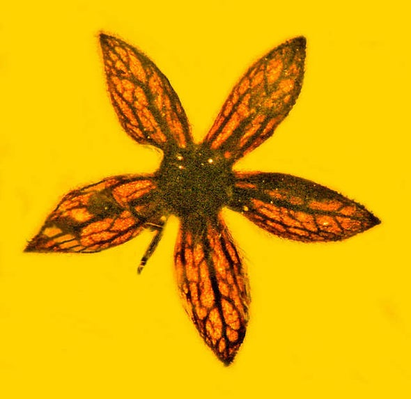 Eye Candy: Fossil Flowers Bloomed When Dinosaurs Ruled Earth
